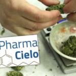 Colombia autoriza la producción yventa de marihuana medicinal (VIDEO)