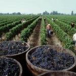 Perú declara interés nacional la difusión de la producción de vino y pisco