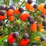 Un profesor cultiva un árbol que da 40 frutas distintas (VIDEO)