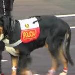 Desfile Militar: mascotas del presidente Kuczynski se robaron el show [VÍDEO]