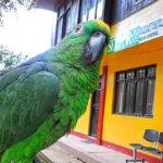 Serfor continúa lucha contra tráfico ilegal de fauna silvestre