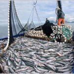 Gobierno da por finalizada primera temporada de pesca de anchoveta