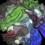 Nuevo mapa del cerebro identifica 100 regiones desconocidas del córtex