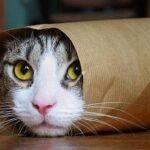 Múnich: Suben fotos de gatitos para mostrar respeto tras tiroteo