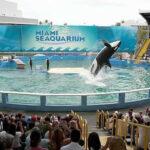 Ambientalistas apelan caso contra acuario por cautiverio de orca Lolita