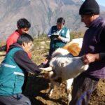 Apurímac: SENASA intensifica la prevención y control de la rabia