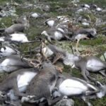 Tormenta eléctrica mata a 323 renos en el sur de Noruega