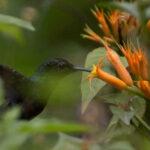 Registran más de 600 especies de orquídeas en parque nacional de Pasco