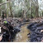 Petroperú pide sanciones ejemplares por atentados contra Oleoducto Nor Peruano