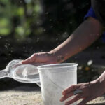 Zika: Experimento con mosquito transgénico suscita polémica en EEUU