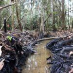 Indeci: Derrame de petróleo en Amazonas afecta a 90 personas