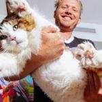 EEUU: El gato gigante Samson compite ahora en el récord Guinnes (VIDEO)