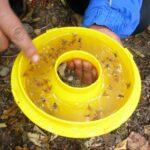 Apurímac: SENASA coordina con productores control de mosca de la fruta