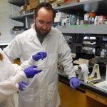 EEUU: Científicos desarrollan pequeños pulmones realizados en probetas