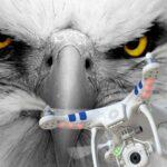 Policía holandesa primera en utilizar águilas para derribar drones