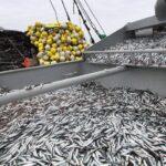 INEI revela que la producción pesquera creció 103.23% en julio