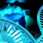 Elaboran el primer mapa global de la diversidad genética en el planeta