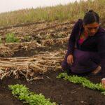 FAO y ONU Mujeres destacan papel femenino contra pobreza y por alimentación