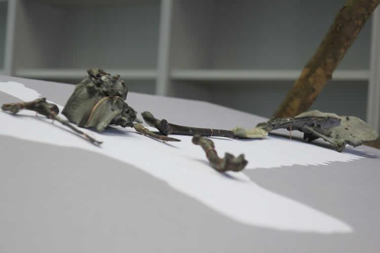 Fonador de aves - 2