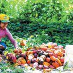 Sierra y Selva exportadoras promueven proyectos de inversión productiva