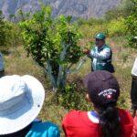 Apurímac: SENASA involucra a productores para prevenir plagas en cítricos