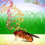 Argentina: Expertos debaten cómo frenar avance de la mosca de la fruta