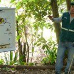 SENASA Apurímac orienta labores para controlar mosca de la fruta