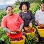 En norte peruano pequeños productores elevan sus ventas en 332%