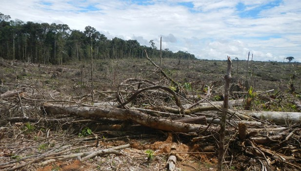 deforesta3