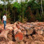 Amazonía peruana perdió casi 2 millones de hectáreas de bosques en 15 años