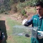 Apurímac: Acciones del Senasa con productores reducen incidencia de roedores