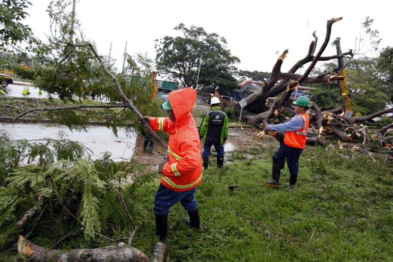 PA20014 CIUDAD DE PANAMÁ (PANAMÁ), 22/11/2016.- Obreros trabajan en retirar un árbol que cayó sobre un vehículo a causa de la tormenta tropical Otto hoy, martes 22 de noviembre de 2016, en la Ciudad de Panamá (Panamá). Las autoridades removieron el árbol que cayó sobre el auto y mató a un menor en Panamá. Al menos cuatro muertos, un desaparecido, medio centenar de viviendas destruidas, suspensión de clases e interrupciones en los aeropuertos causó hasta hoy la tormenta tropical Otto, anunciaron las autoridades de Panamá. EFE/Alejandro Bolívar