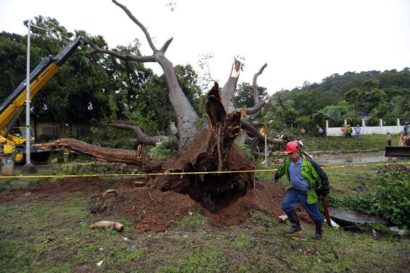 PA2005. CIUDAD DE PANAMÁ (PANAMÁ), 22/11/2016.- Obreros trabajan en retirar un árbol que cayó sobre un vehículo a causa de la tormenta tropical Otto hoy, martes 22 de noviembre de 2016, en la Ciudad de Panamá (Panamá). Las autoridades removieron el árbol que cayó sobre el auto y mató a un menor en Panamá. Al menos cuatro muertos, un desaparecido, medio centenar de viviendas destruidas, suspensión de clases e interrupciones en los aeropuertos causó hasta hoy la tormenta tropical Otto, anunciaron las autoridades de Panamá. EFE/Alejandro Bolívar