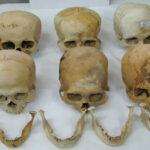 Hallan seis cráneos de cultura Paracas en un terminal postal de Serpost