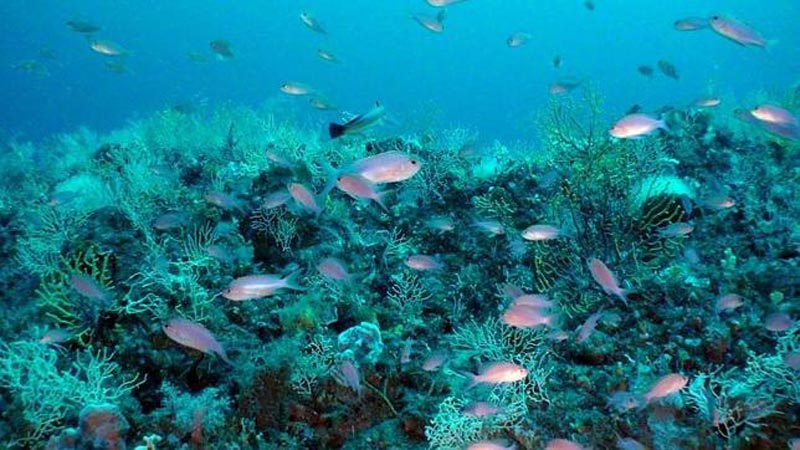 seco-olivos-oceana