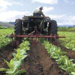 FMI destaca crecimiento robusto de la economía de Nicaragua