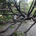 India: Ciclón Vardah se debilita en depresión tras dejar 18 muertos