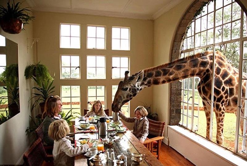 girafales3