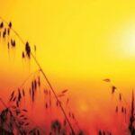 La temperatura global batirá un nuevo récord en 2016, según OMM