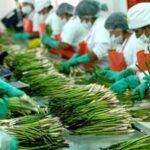Exportaciones peruanas a los países nórdicos crecerían un 7%