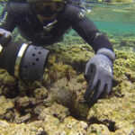 Brasil: Divulgan primeras imágenes de arrecife de coral hallado el 2016