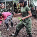Colombia: Gobierno prioriza zonas de transición para las FARC