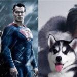 """Premios Razzie: """"Zoolander N° 2"""" y """"Batman v Superman"""" favoritas alos """"anti-Óscar"""""""
