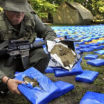 Colombia: Incautan media tonelada de cocaína a disidentes de las FARC