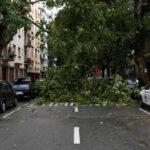 Uruguay: Vientos huracanados arrancan árboles y dañan edificios (VIDEO)
