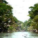Sismo de magnitud 5,5 se siente en reserva natural de la Amazonía peruana