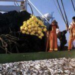 Primera temporada de pesca de anchoveta se iniciaría en 2da. quincena de abril