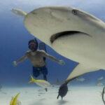 EEUU: Cineasta de 'Sharkwater' desaparece buceando entre tiburones (VIDEO)