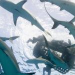 EEUU: Sobrevivientes de ataques de tiburón se unen para defenderlos