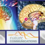 Científicos dan nuevo paso para tratar las enfermedades psiquiátricas